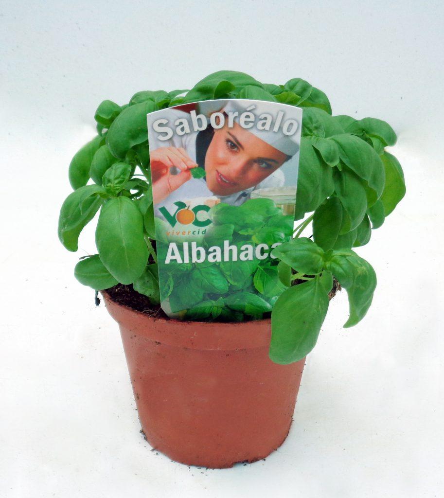 albahaca-hoja-grande-vivercid