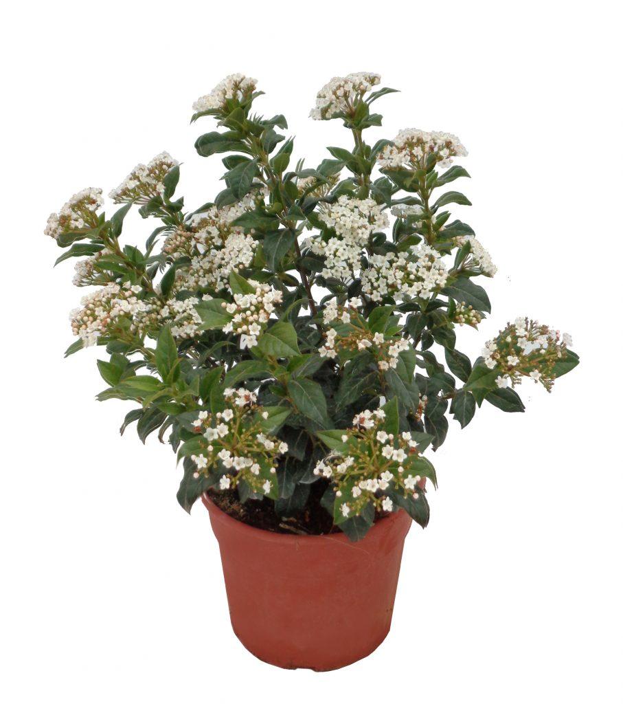 Plantas colgantes de exterior resistentes al frio perfect - Plantas exteriores resistentes ...