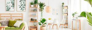 6 plantas que ayudan a limpiar el aire de casa