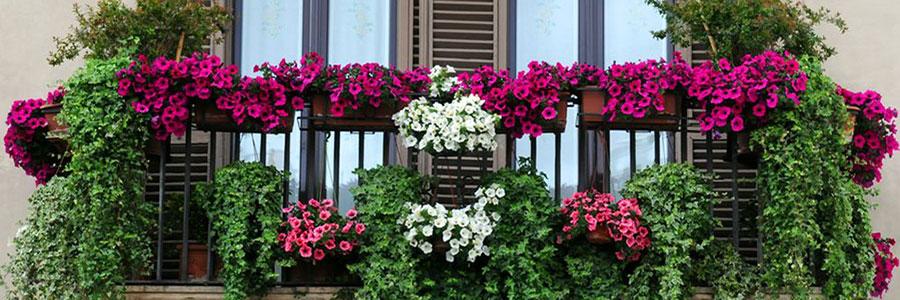 Qu plantas son las m s adecuadas para cada tipo de - Plantas de balcon resistentes al sol ...